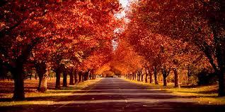 Top Ten Fall Favorites