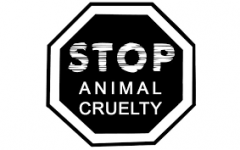 An Obvious Issue: Animal Cruelty